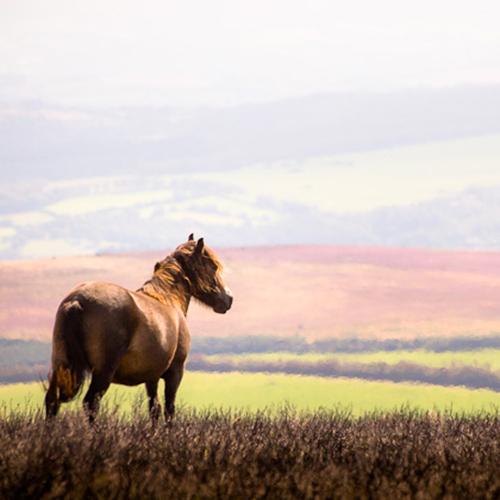 Exmoor National Park